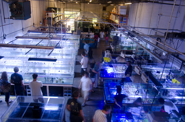 The Fish Store in Chamblee, GA - Fish Room